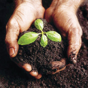 Organic Fertiliser (Compost)